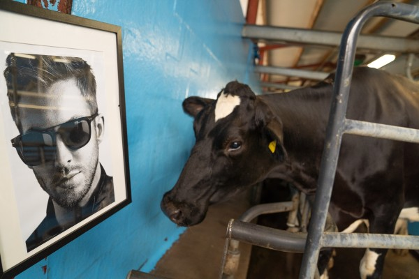 Cheesemaker Joseph Heler plays music including Calvin Harris to make its cows happier