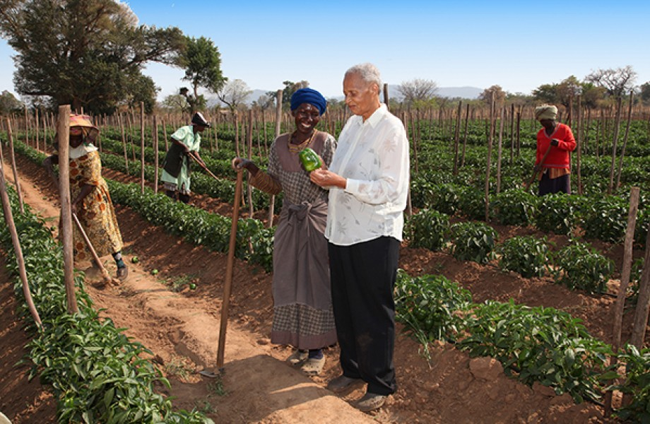 African Farmers Inspecting Produce in Field