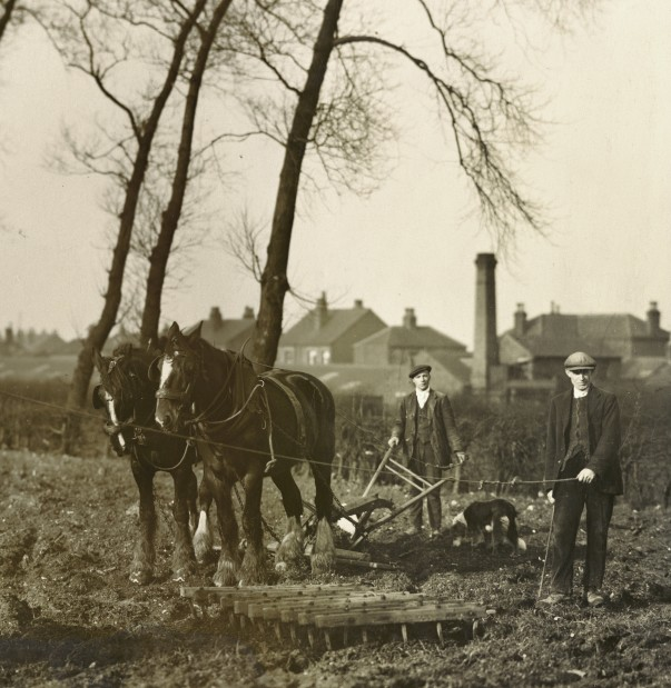 Simon's grandfather John used a horse and cart to plough the fields