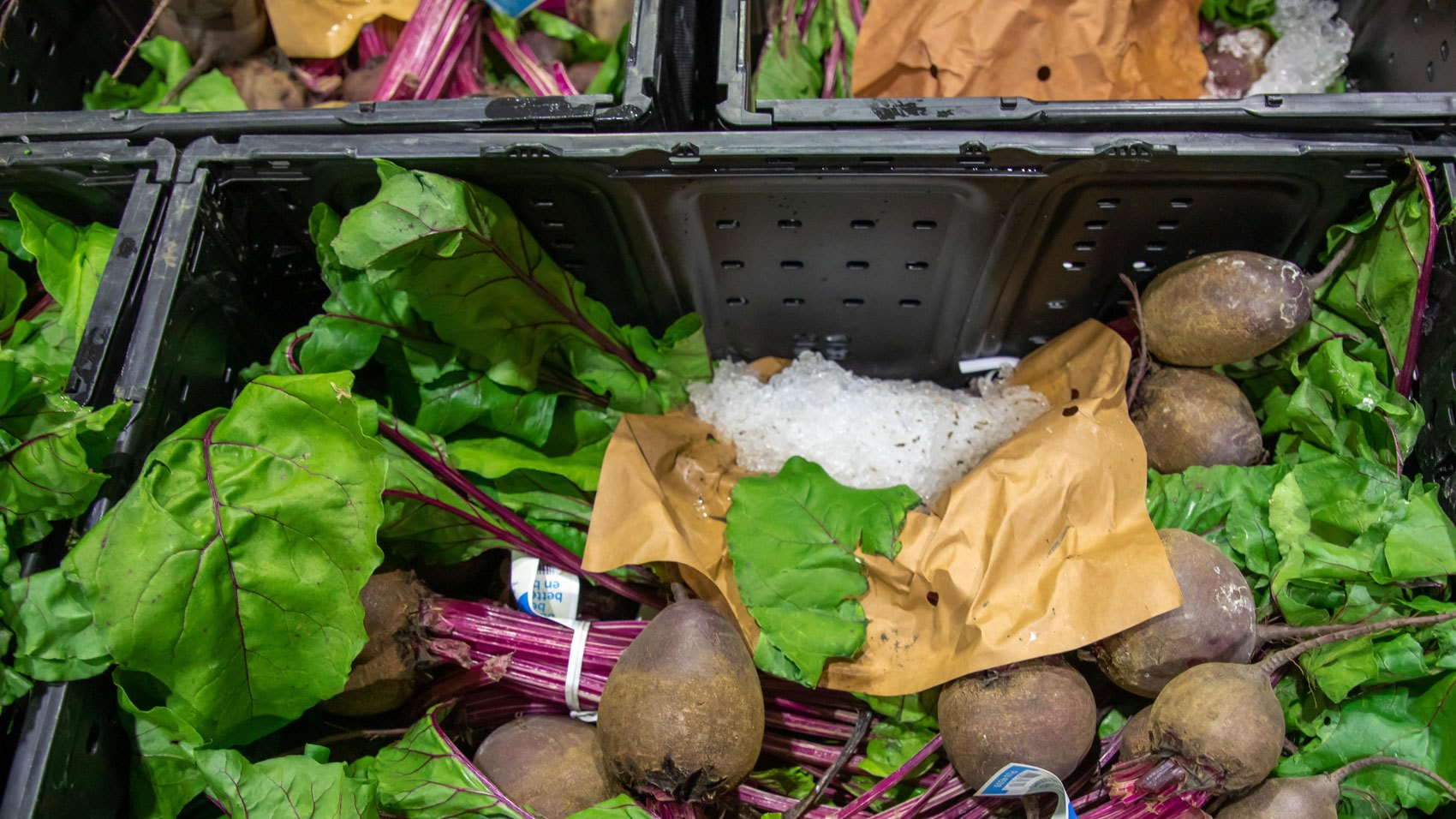 Waste/beets-shipping.jpg